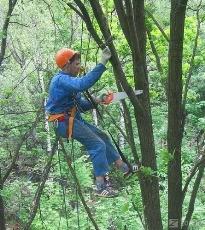 Санитарное кронирование: обрезка деревьев